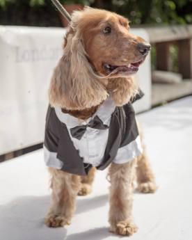 Pup Idol - James Bond  copy